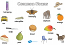 Examples of Common noun