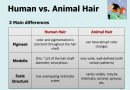 Human and Animal Hair