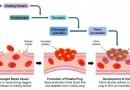 Blood clotting factors