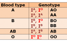 Blood group and Genotype