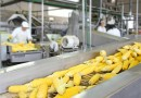 What Is Food Processing?