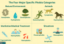 What Are Phobias